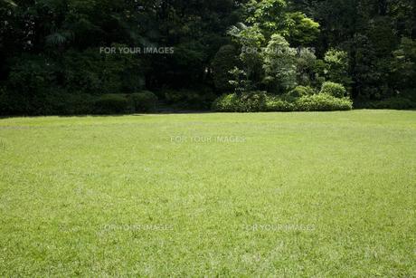 芝生の写真素材 [FYI00479229]