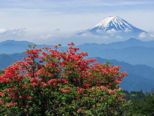 レンゲツツジと富士山の写真素材 [FYI00480158]