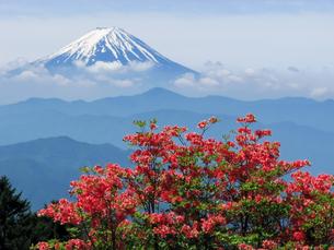 富士山とレンゲツツジの写真素材 [FYI00480160]
