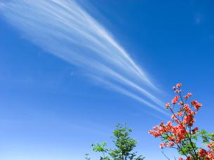 青空とレンゲツツジの写真素材 [FYI00480161]