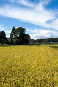武蔵野のいなほ風景の写真素材 [FYI00480178]