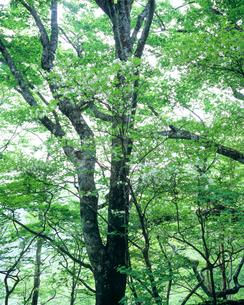 静岡県・安倍の森の写真素材 [FYI00480211]