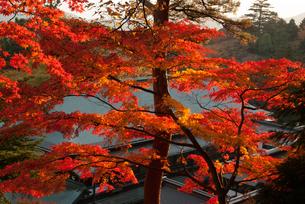 高尾山の紅葉の写真素材 [FYI00480249]