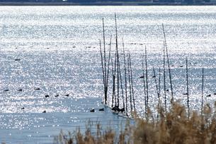 きらめきの涸沼の写真素材 [FYI00480269]