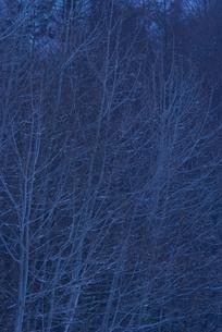 日没の林の写真素材 [FYI00480296]