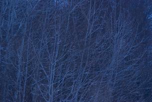日没の林の写真素材 [FYI00480299]