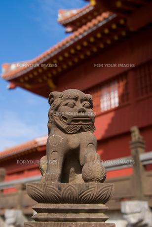 首里城の狛犬の写真素材 [FYI00480406]