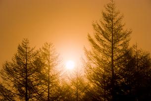 カラマツ林と日の出の写真素材 [FYI00480415]