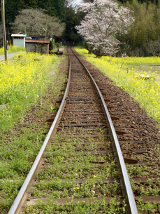 春の線路の写真素材 [FYI00480421]