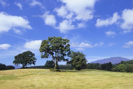 牧場の木々たち、Trees of the ranchの素材 [FYI00480437]