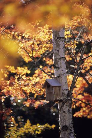 小鳥の住処、Bird habitat ofの素材 [FYI00480444]