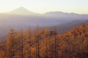 朝焼けのカラマツ林と富士、Larch forests of sunrise and Fujiの写真素材 [FYI00480449]