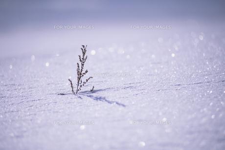 雪に埋もれて、Buried in snowの素材 [FYI00480455]