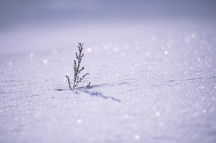 雪に埋もれて、Buried in snowの写真素材 [FYI00480455]