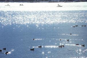 のどかなる湖畔、The idyllic lakeside Naruの写真素材 [FYI00480469]