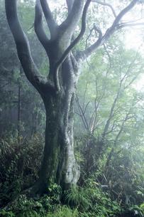 森の神樹の写真素材 [FYI00480492]