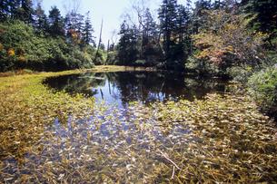 池と水草の写真素材 [FYI00480500]