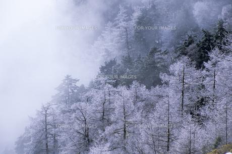 樹氷と山霧の素材 [FYI00480526]