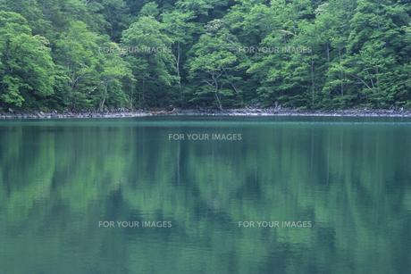 青緑色の池の写真素材 [FYI00480530]
