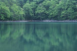 青緑色の池の素材 [FYI00480530]