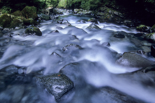 石のある河床、Riverbed with stoneの素材 [FYI00480558]