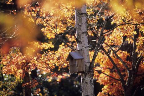小鳥の住処、Bird habitat ofの素材 [FYI00480563]