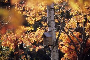 小鳥の住処、Bird habitat ofの写真素材 [FYI00480563]