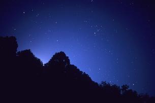木々たちと星空、Trees and skyの素材 [FYI00480572]