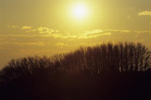 樹林と太陽Forest and sunの素材 [FYI00480581]