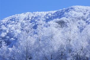 霧氷の山々、Mountains of rimeの素材 [FYI00480584]