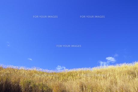草原と青き空、Grassland and Blue skyの素材 [FYI00480590]