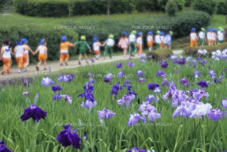 園児たちの散歩道の写真素材 [FYI00480602]