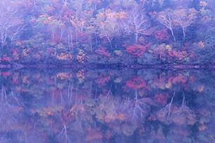 湖畔の油絵の写真素材 [FYI00480644]
