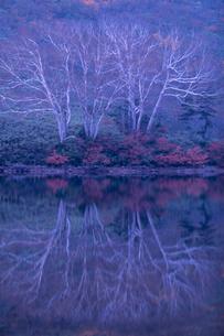 樹木と水影(対称)の写真素材 [FYI00480645]