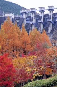 紅葉と丹沢ダムの写真素材 [FYI00480653]