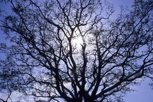 光芒と大樹の素材 [FYI00480659]