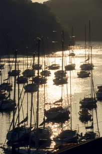 ヨットたちの休息の写真素材 [FYI00480684]