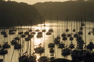 ヨットたちの休息の写真素材 [FYI00480685]