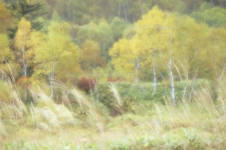 志賀高原・秋の野山の素材 [FYI00480696]