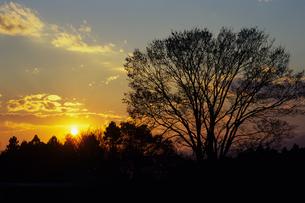里山の夕映えの木々たちの素材 [FYI00480741]