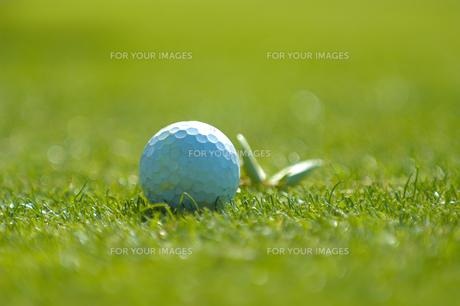 芝生の上のゴルフボールの写真素材 [FYI00480808]