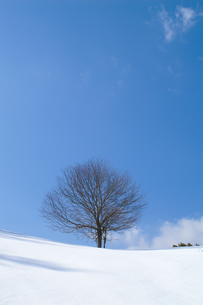 雪原の一本木の写真素材 [FYI00480824]