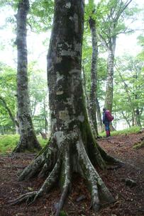 ブナの木々たちの写真素材 [FYI00480845]