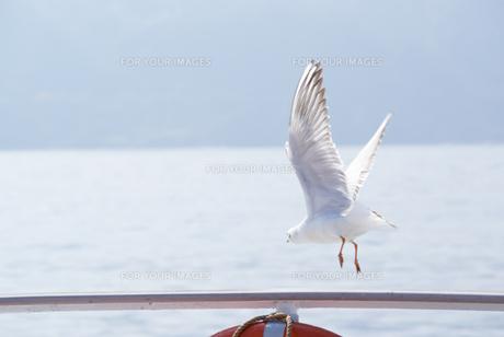 飛び立つカモメの写真素材 [FYI00480875]
