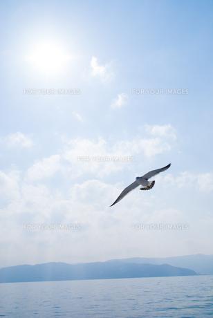 高く高く飛び立つカモメの写真素材 [FYI00480878]