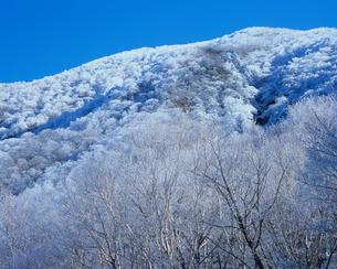 赤城山・冬化粧の山と樹木たちの素材 [FYI00480921]
