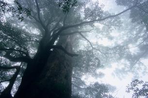 霧かすむ屋久島の森の素材 [FYI00481105]