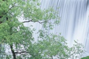 爽やかな緑と水流の素材 [FYI00481203]
