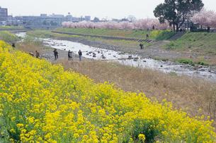 春色の河川敷の写真素材 [FYI00481217]