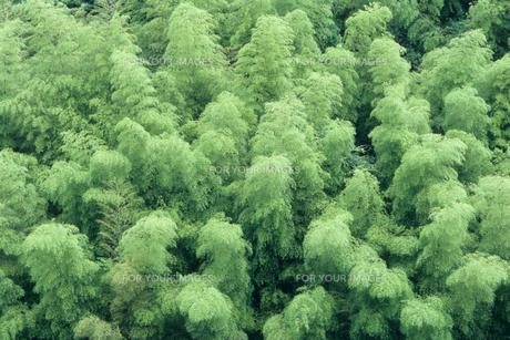 緑の竹林の素材 [FYI00481233]